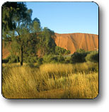 Uluru - Kata Tjuta National Park - Port Augusta Accommodation