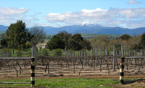 Buller View Wines - Port Augusta Accommodation