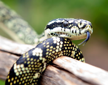 Reptile Encounters - Port Augusta Accommodation