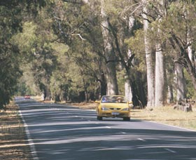 Ludlow Tuart Forest - Port Augusta Accommodation