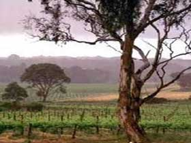 Yangarra Estate Vineyard - Port Augusta Accommodation