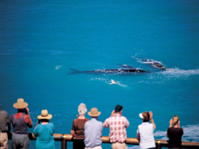 Whale Watching At Head Of Bight - Port Augusta Accommodation