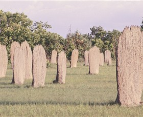 Magnetic Termite Mounds - Port Augusta Accommodation