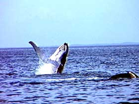 Whale Watching - Port Augusta Accommodation