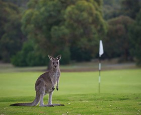 Anglesea Golf Club - Port Augusta Accommodation