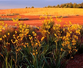 Royal Botanic Gardens Victoria Cranbourne - Port Augusta Accommodation