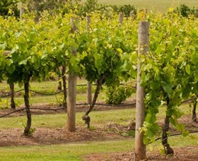 Mt Coghill Vineyard