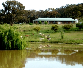 Clearview Alpacas - Port Augusta Accommodation