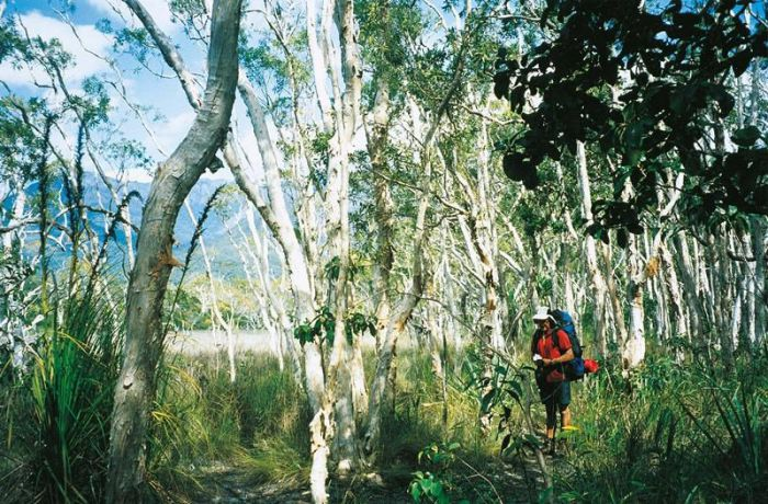 Thorsborne Trail Hinchinbrook Island National Park - Port Augusta Accommodation