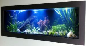 Aquariums in Cairns - Port Augusta Accommodation