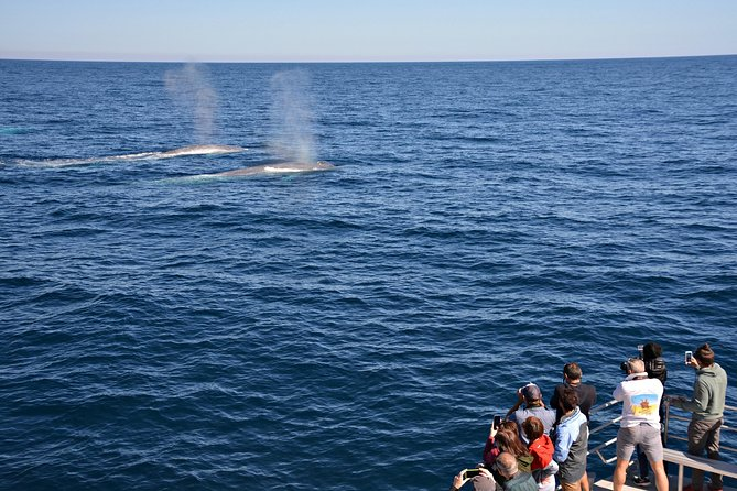 Blue Whale Perth Canyon Expedition