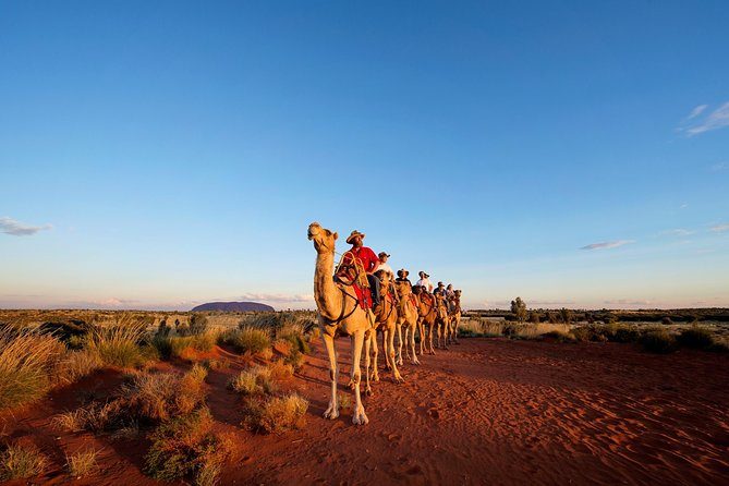Uluru Camel Express Sunrise or Sunset Tours - Port Augusta Accommodation