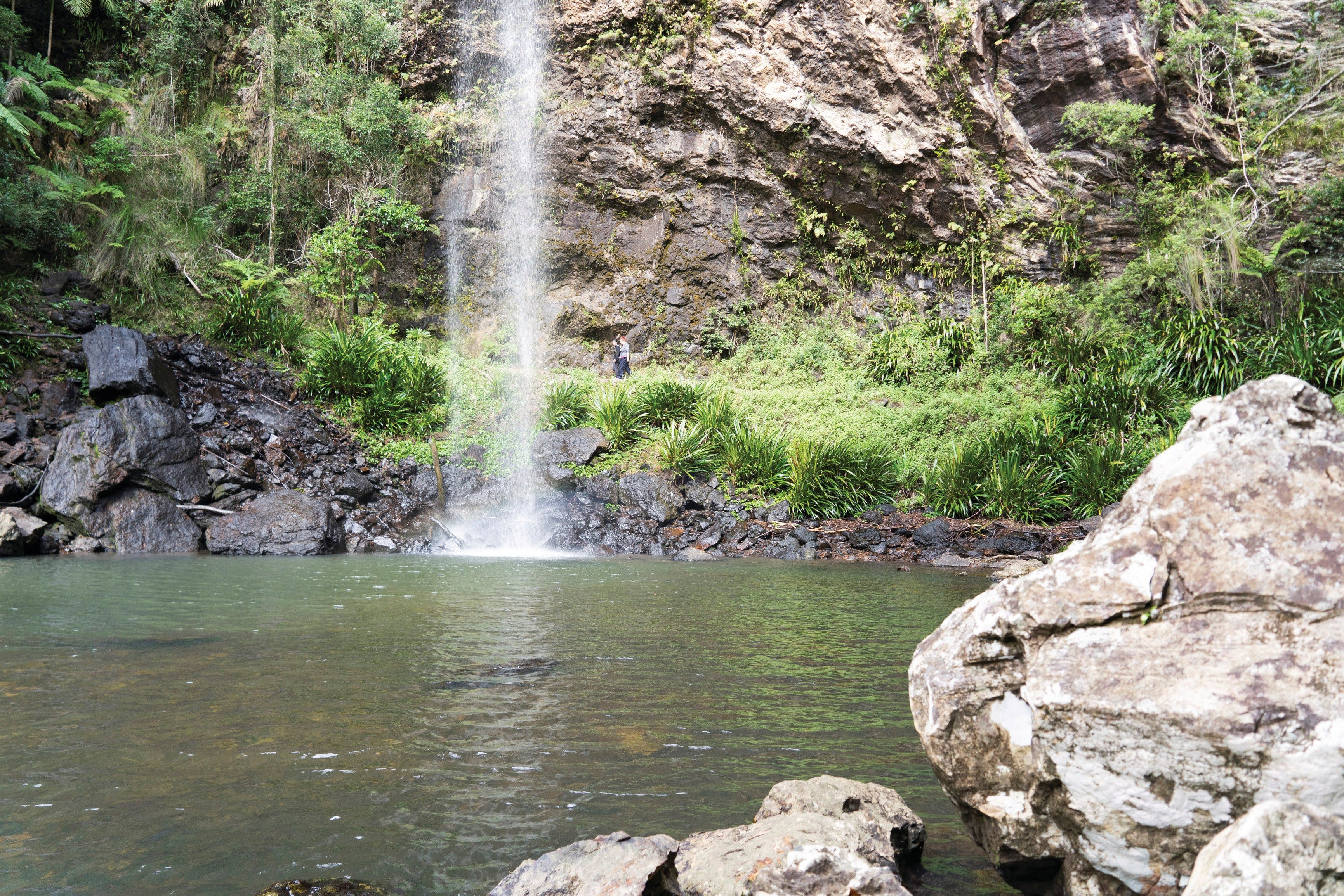 Twin Falls Circuit Springbrook National Park - Port Augusta Accommodation