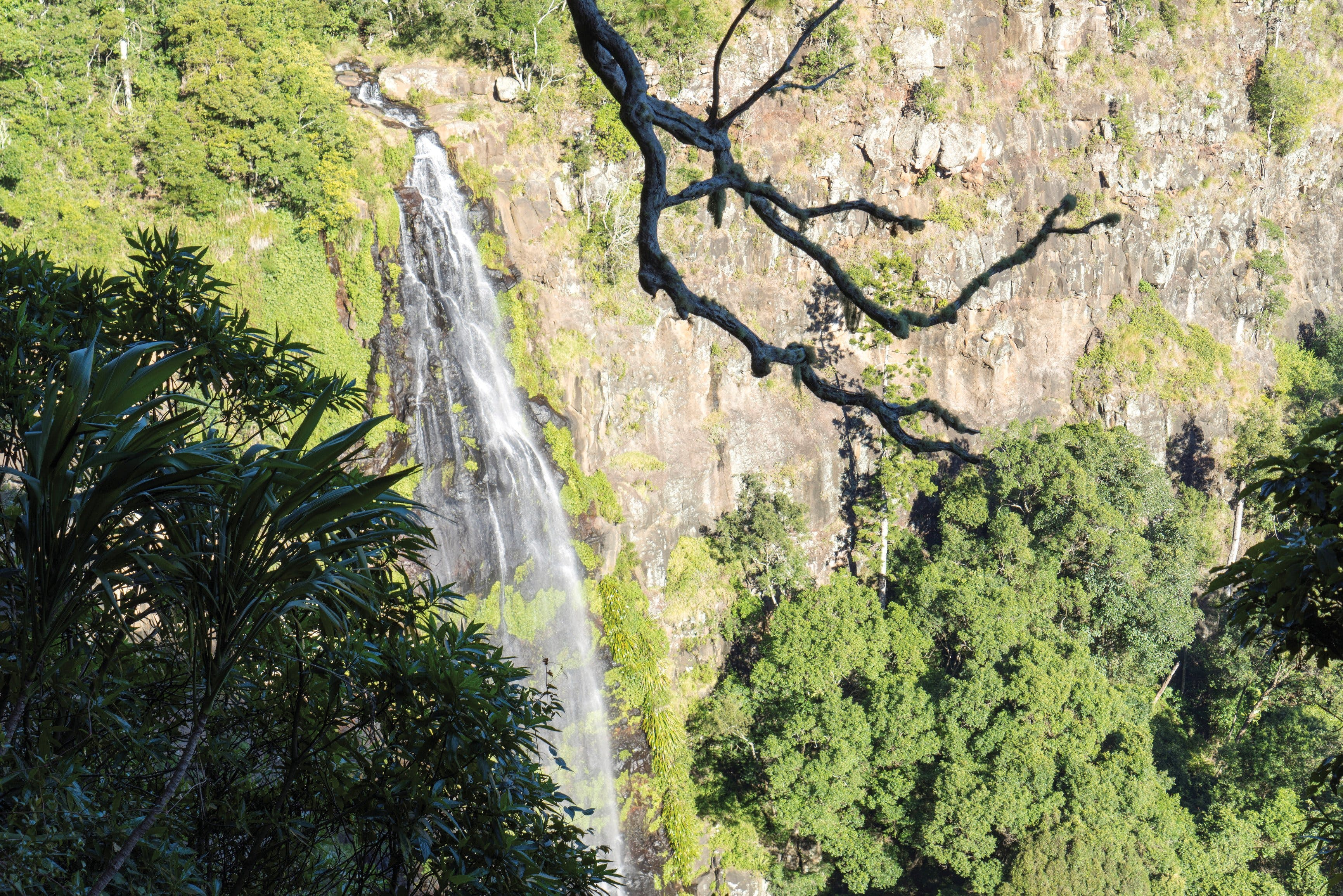 Morans Falls track Lamington National Park - Port Augusta Accommodation