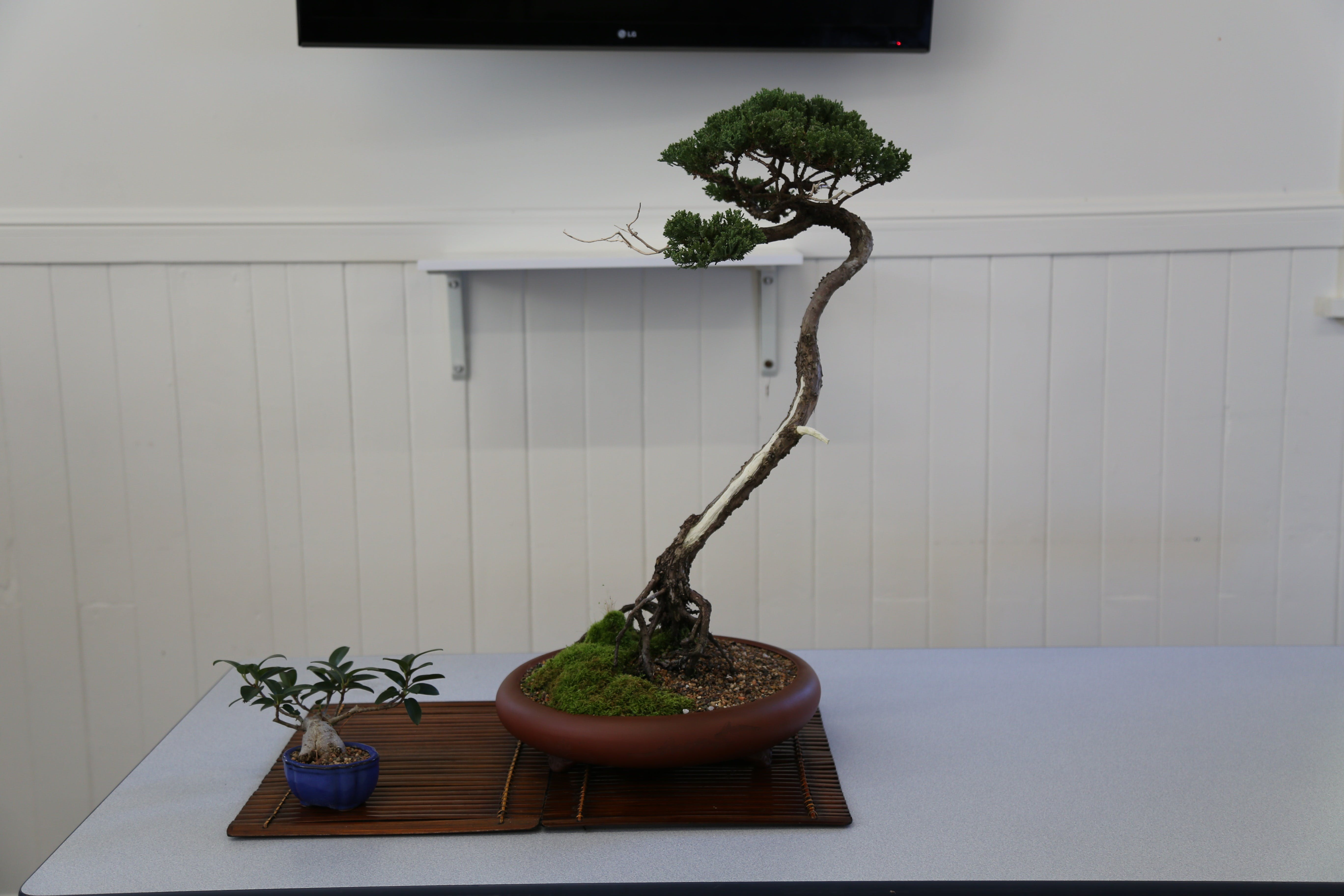 Wauchope Bonsai Workshop Group - Port Augusta Accommodation