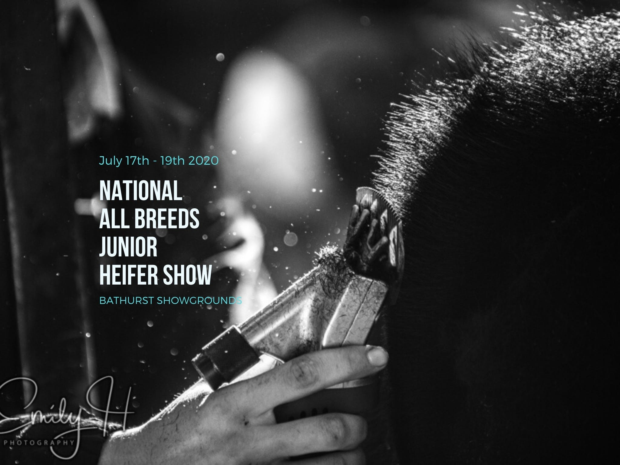 National All Breeds Junior Heifer Show - Port Augusta Accommodation