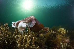 Cuttlefish Diving  Snorkeling EVERYDAY May -August - Port Augusta Accommodation