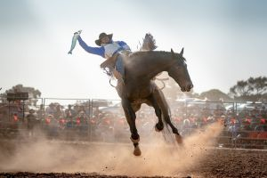 Rodeo by the Sea - Streaky Bay - Port Augusta Accommodation
