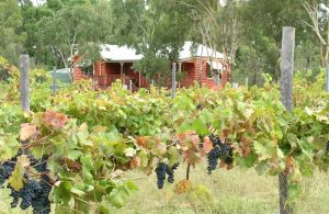 Fergies Hill Spa Cottage  Granite Ridge Wines - Port Augusta Accommodation